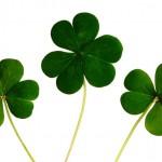 Spécial Saint-Patrick : 6 idées pour un apéro tout en vert