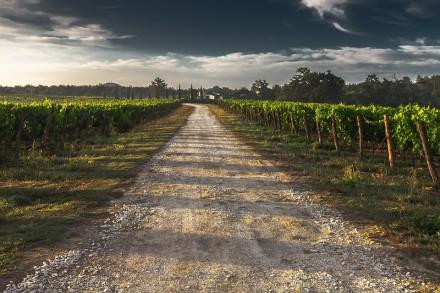 france-des-vins