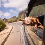 Les vacances avec un animal de compagnie