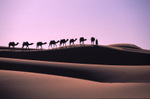 Camel_caravan_at_sunrise_2